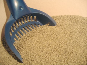 kitty litter image